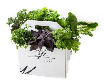 Коробка зелени